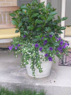 259 & Flower Pot Arrangement Willow Springs IL - Hub Landscaping